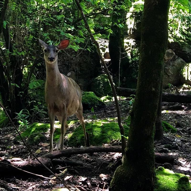Tepoztlán Morelos santuario de los venaditos