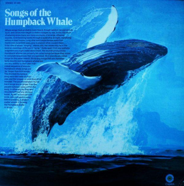 10 datos interesantes sobre ballenas