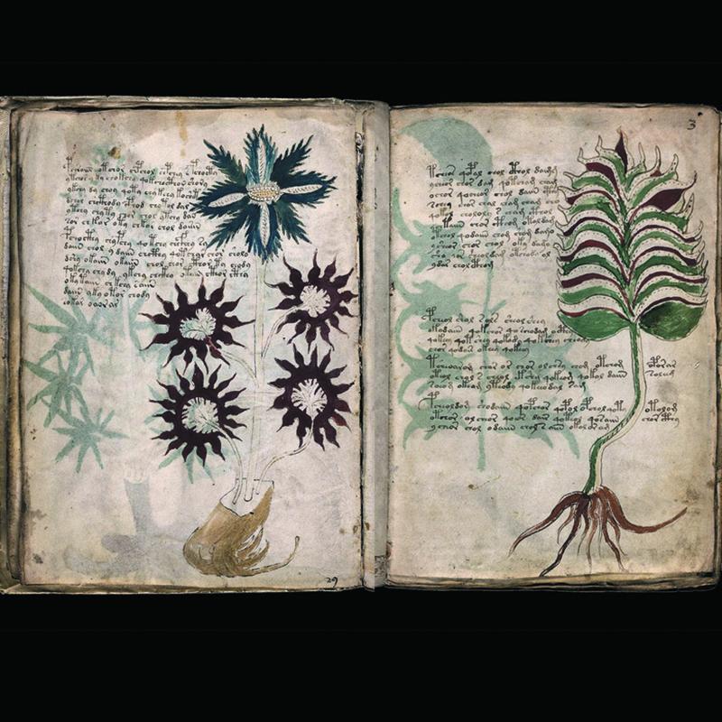 El manuscrito de Voynich remedios