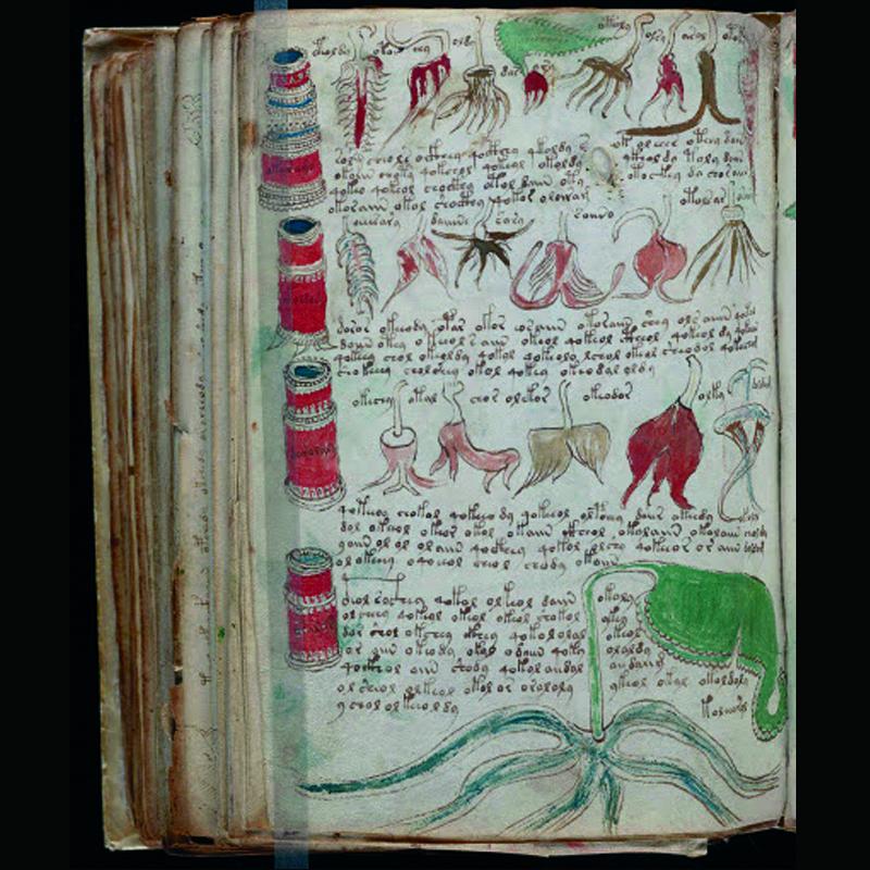 El manuscrito de Voynich plantas