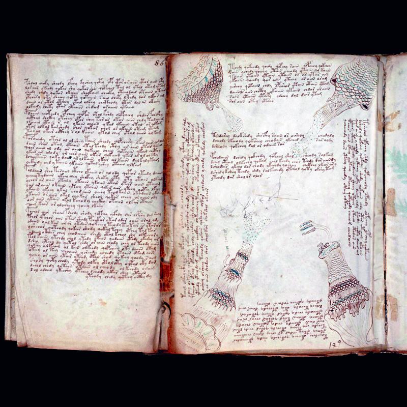 El manuscrito de Voynich pilares