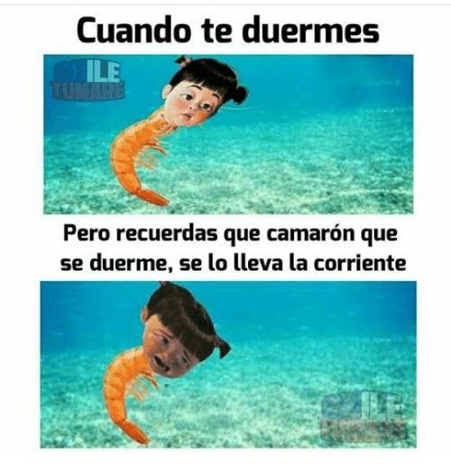 DICHOS MEXICANOS CAMARÓN QUE SE DUERME